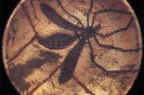 Plato del Mosquito